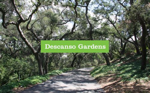 tomatomania-descano-gardens-event-1