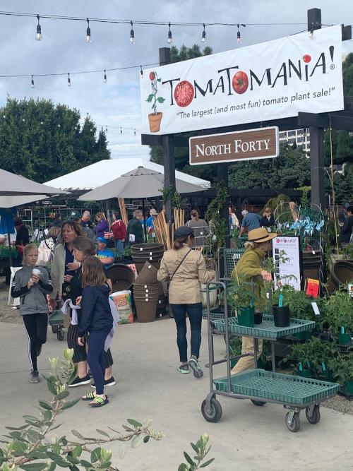 tomatomania-rogers-gardens-2