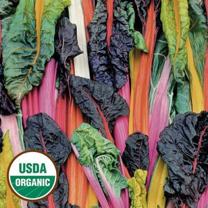 0046-five-color-silverbeet-swiss-chard-organic.jpg