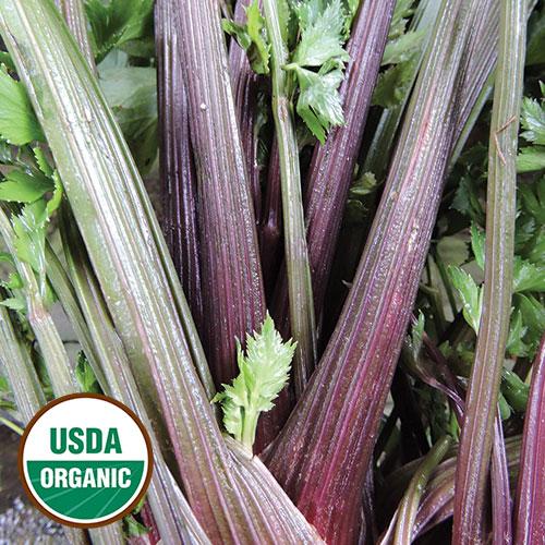 0110-PINK-plume-celery-organic.jpg
