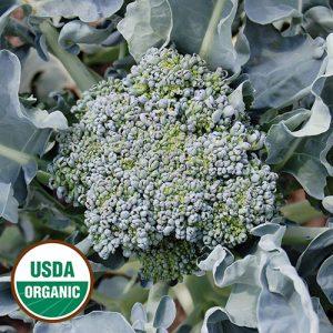 0348A-CALABRESE-broccoli-organic.jpg