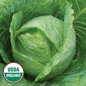 0353-early-JERSEY-wakefield-cabbage-organic.jpg