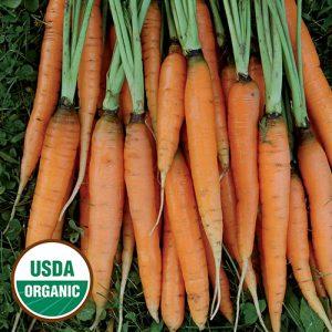 0358A-SCARLET-nantes-organic-carrot.jpg