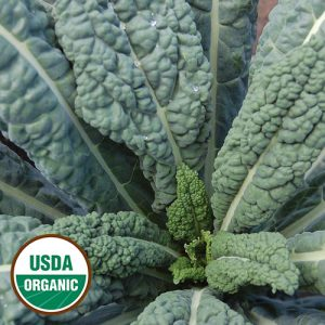 0623-LACINATO-kale-organic.jpg