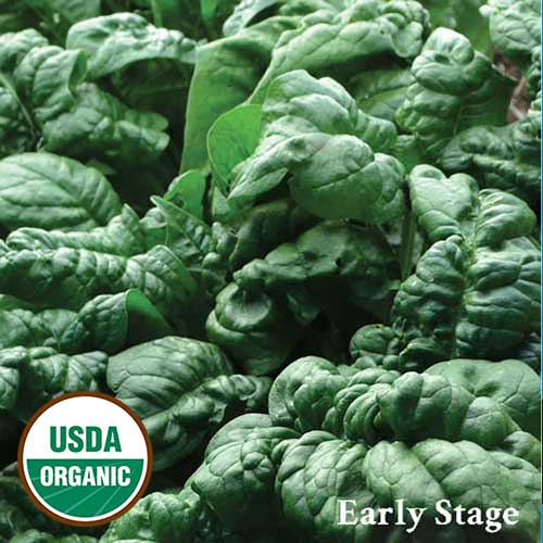 0656-1-BLOOMsdale-spinach-organic.jpg