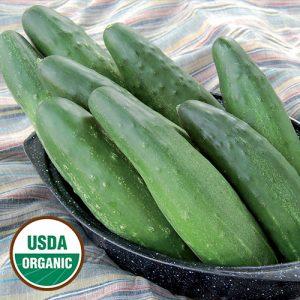 0866-longfellow-cucumber-organic.jpg