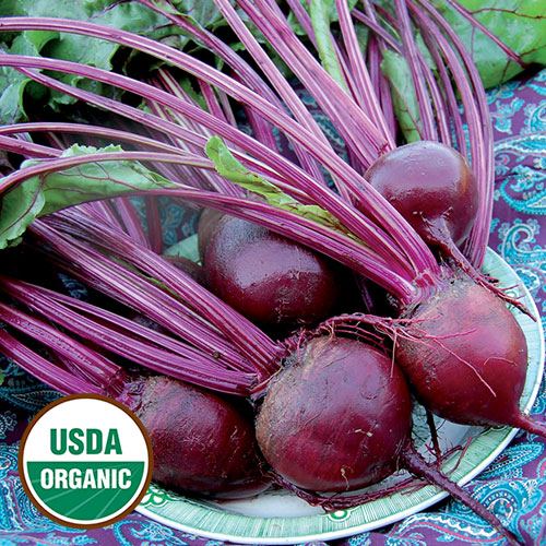 0910-DETROIT-dark-red-beet-organic.jpg
