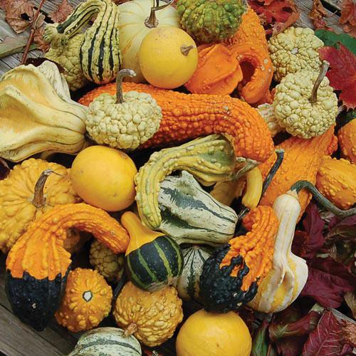 1049-gourd-mixture-gourd.jpg
