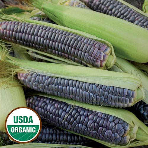 1194-blue-jade-corn-organic.jpg