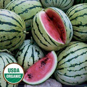 1239A-chris-cross-watermelon-organic.jpg