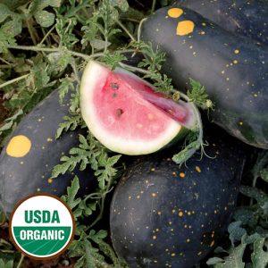 1241-moon-and-stars-cherokee-watermelon-organic.jpg