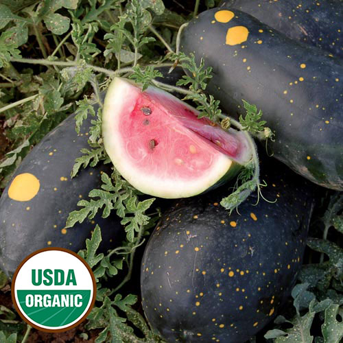 1241-moon-and-stars-cherokee-watermelon-organic.jpg