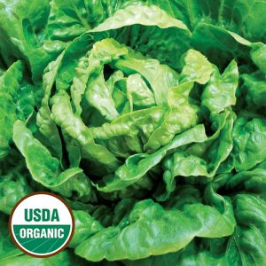 1523-WINTER-density-lettuce-organic.jpg