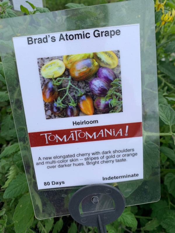 tomatomania-seaside-gardens-1