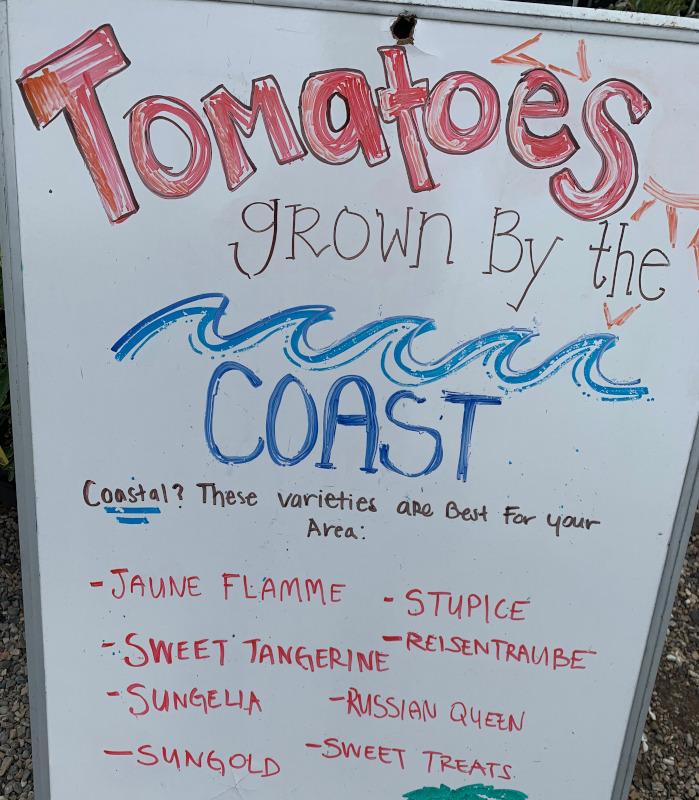tomatomania-seaside-gardens-2